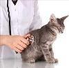 Ветеринарные клиники в Болхове